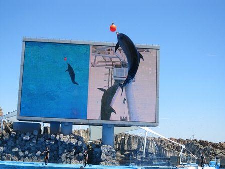 水族館いるかジャンプ