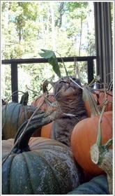 10-2-10_Pumpkin