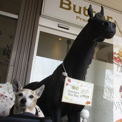 真っ黒い馬
