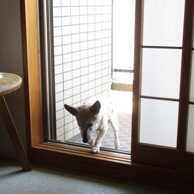 お嬢さん、お入んなさい