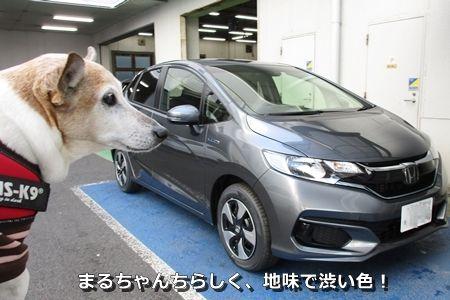 しぶしぶしぶ〜