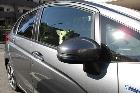 運転する方も