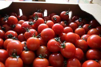170105ミニトマト
