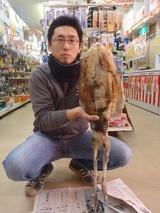 20120107ミズイカ佐尾さん