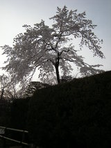 0803嵐山015