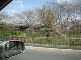 0803嵐山003