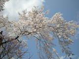 0803嵐山006