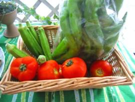 実家野菜7