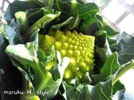 野菜14m