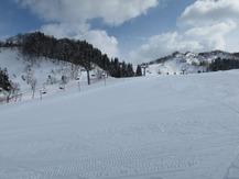雪椿 (2)