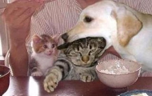 おい、バカ犬!! 何食ってんだよ・・