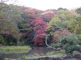 三島 楽寿園 2