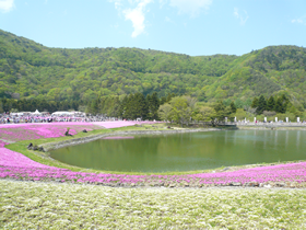 sibazakura2015-02