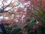 三島 楽寿園 1