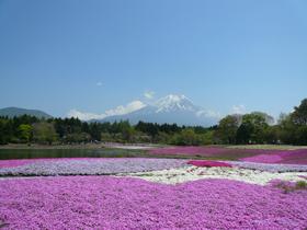 sibazakura2015- 01
