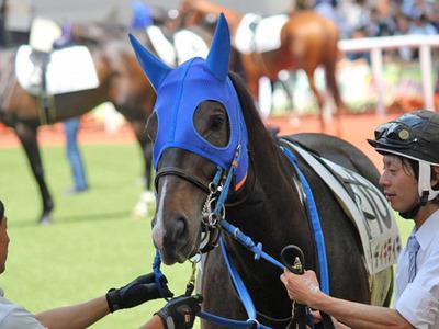 horsePhoto.php