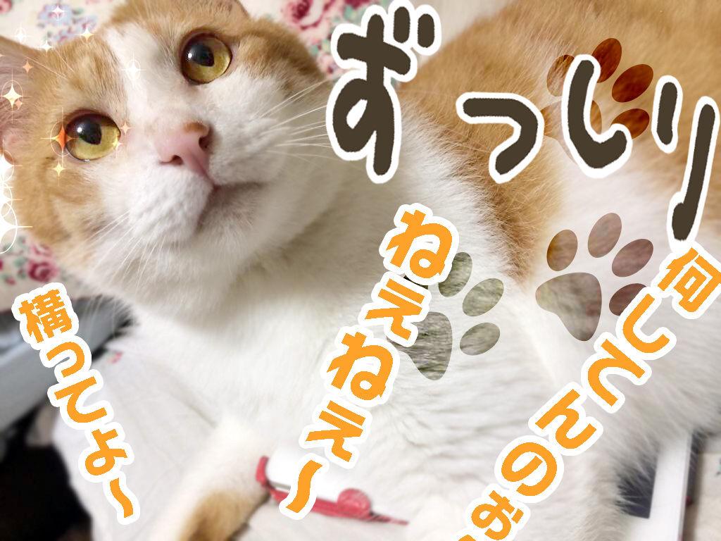 http://livedoor.blogimg.jp/marvelous_staff/imgs/6/9/69935621.jpg