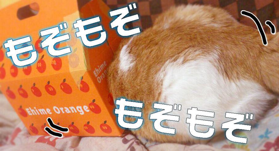 http://livedoor.blogimg.jp/marvelous_staff/imgs/c/8/c8ca34b0.jpg