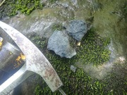 P7040047‗鍵層の海緑石砂岩