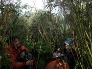 P7040166‗尾根上は笹藪