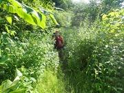 P7190097_ウエンベツの林道に上がる
