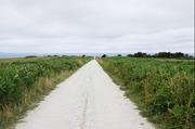 白い道12