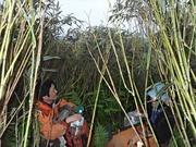 P7040165‗尾根上は笹藪