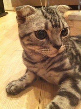 横山の飼い猫もうちょっとイケてる名前を付けようぜ【AKB48&NMB48/横山由依】