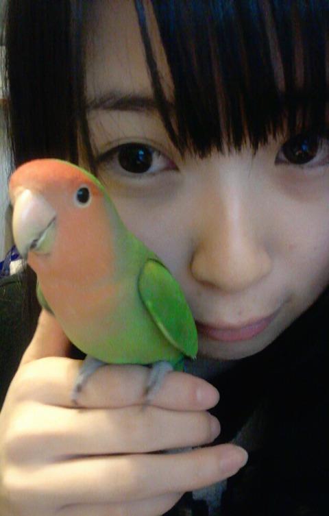 一番ペットを可愛がってるメンバーは誰? 【AKB48G】