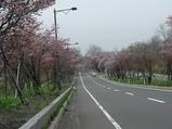 桜並木2010