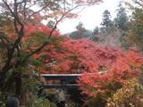 紅葉 大平山