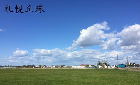 札幌黄40cd4