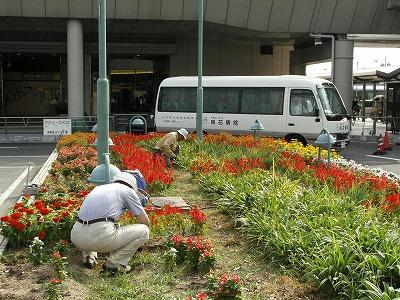 和泉中央駅花壇