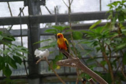 掛川花鳥園2