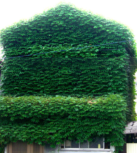 緑に囲まれた家01
