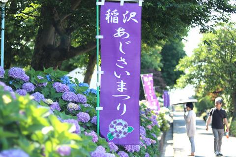 約1万株のあじさいが咲き誇る「稲沢あじさいまつり」へ行ってきました!