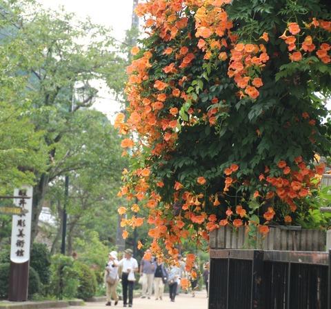 見事な咲きっぷりのお花と散策する人々(米原市醒ヶ井)