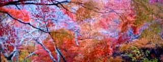 pict-紅葉-29