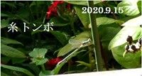 s-2020-09-15_183642