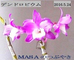 s-2016-05-28_072010