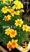 s-2020-08-17_175141