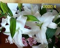 s-2020-04-25_102656