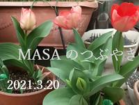 2021-03-21_073449