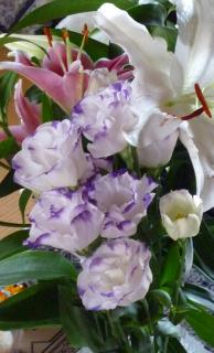好きな花-3