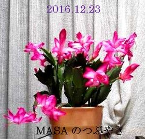 s-2016-12-25_134751