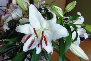 好きな花-1
