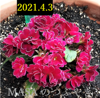 2021-04-03_110914