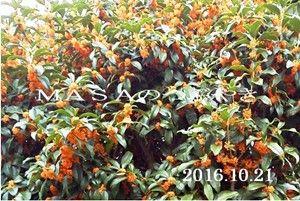 s-2016-10-21_132113