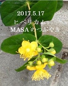 s-2017-05-17_140241