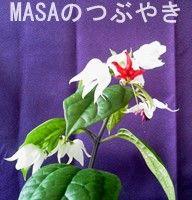 s-ゲンペイカズラ(源平葛)-4